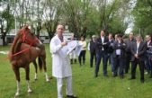 Caballos con microchip: Provincia lanzó un plan de identificación electrónica para equinos