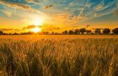 La provincia prevé venderle a Brasil cerca de 4 millones de toneladas de trigo