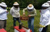 Delegación chilena visitó la Provincia y comienza intercambio en apicultura