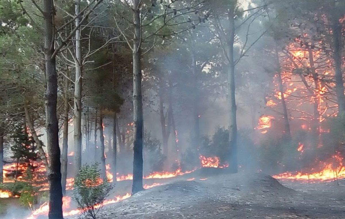 Pinamar / Finalizó el voraz incendio que afectó a Valeria del Mar y Cariló