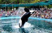 Animalistas harán un escrache en Mundo Marino