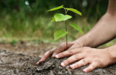 """San Nicolás / La Municipalidad lanza la segunda edición de """"Plantá tu árbol"""""""