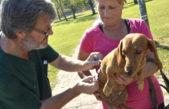 La Plata / Se vacunaron, desparasitaron y castraron más de 3 mil animales en el mes de julio