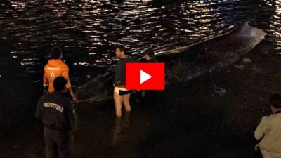 VIDEO / Un grupo de vecinos liberó a una ballena que había quedado varada en Quequén