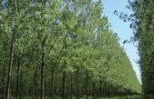 Productores forestales de la provincia cobrarán planes demorados por 8 años