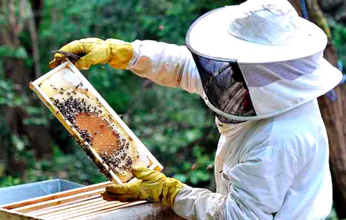 Científicos marplatenses hicieron un descubrimiento que puede revolucionar la apicultura a nivel mundial