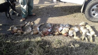 Guardaparques de la provincia detectaron cazadores furtivos en Mar Chiquita y Samborombón